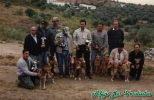 Podenco Andaluz Caza 001