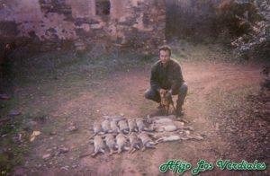 Podenco Andaluz Caza 004