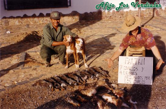 Podenco Andaluz Caza 012