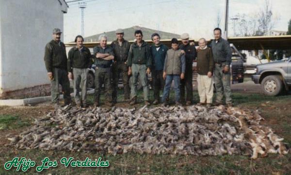 Podenco Andaluz Caza 025
