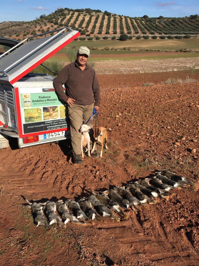 Podenco Andaluz Caza 039